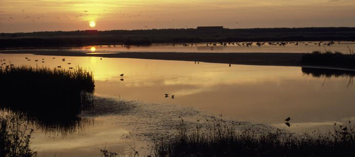 Suffolk's RSPB Minsmere is BBC Springwatch's new home